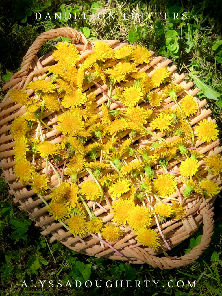 Fried Sweet Dandelion Flowers